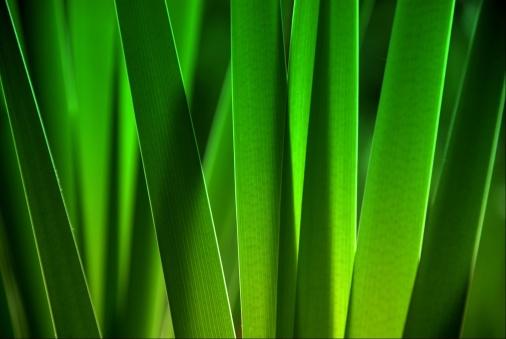 胸を打つ「葉のクローズアップ」:スマホ壁紙(10)