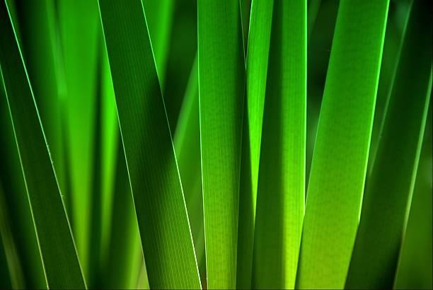 leaves close up:スマホ壁紙(壁紙.com)