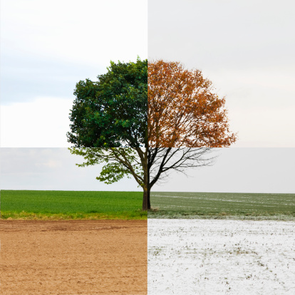 季節「Solitary tree shown in all four seasons」:スマホ壁紙(17)
