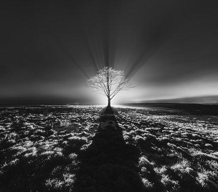 Moon「Solitary Tree」:スマホ壁紙(15)