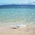 Green Island - Australia壁紙の画像(壁紙.com)