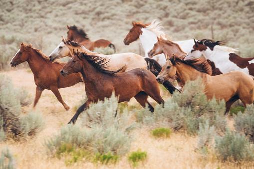 Horse「Cowboy Lifestyle in Utah」:スマホ壁紙(0)