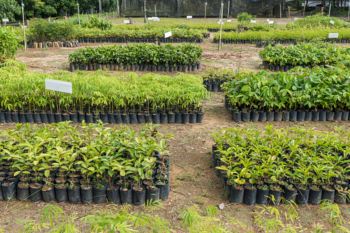 Reforestation「Tree and plant seedlings for reforestation project in Atlantic Rainforest, Guapiacu Ecological Reserve, Rio de Janeiro state, Brazil」:スマホ壁紙(19)