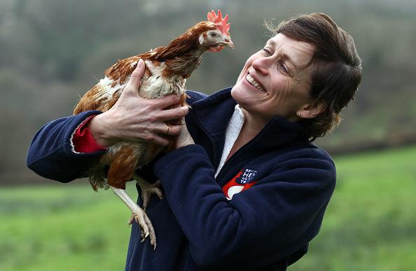 Hen「Britain's Last Battery Hen Is Released」:写真・画像(9)[壁紙.com]