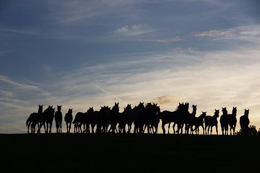 cloud「水平線の所で馬のグループ」:スマホ壁紙(13)