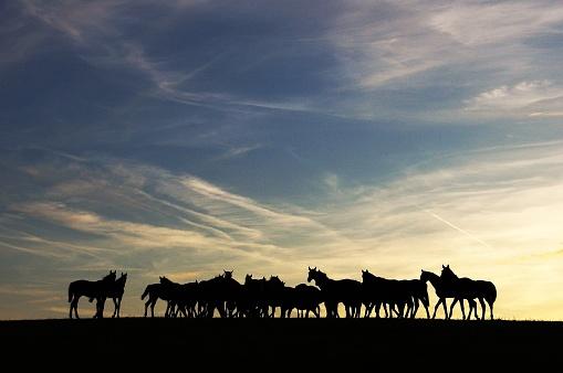 cloud「水平線の所で馬のグループ」:スマホ壁紙(14)