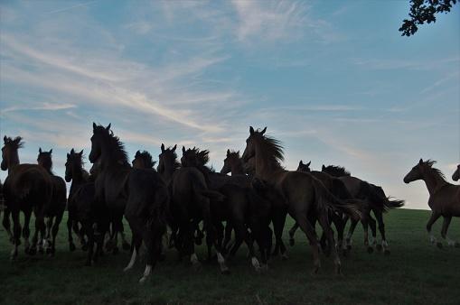 Sunset「水平線の所で馬のグループ」:スマホ壁紙(14)