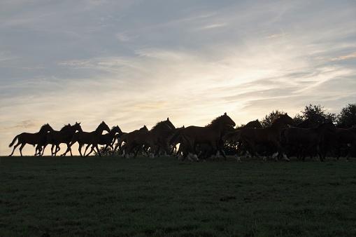 Sunset「水平線の所で馬のグループ」:スマホ壁紙(15)