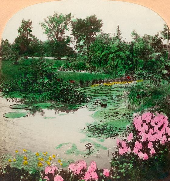 Water Lily「Lily Pond」:写真・画像(12)[壁紙.com]
