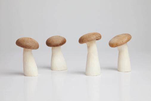 Mushroom「Row of four mushrooms in a row on white background」:スマホ壁紙(6)