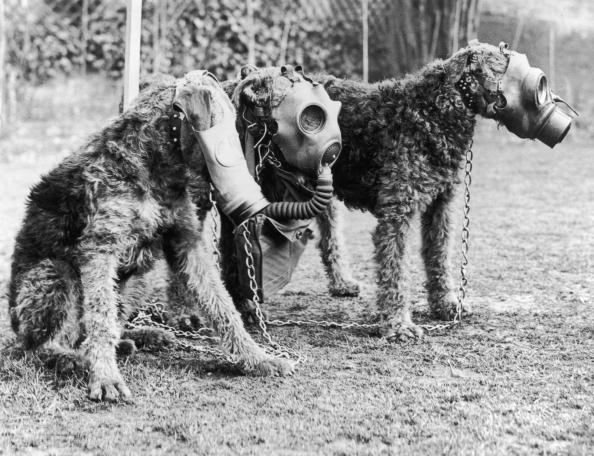 World War II「Gas Masks For Dogs」:写真・画像(3)[壁紙.com]
