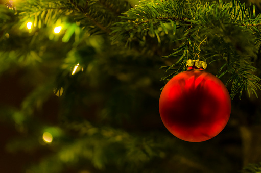 Focus On Foreground「Red Christmas bauble hanging at fir branch」:スマホ壁紙(19)