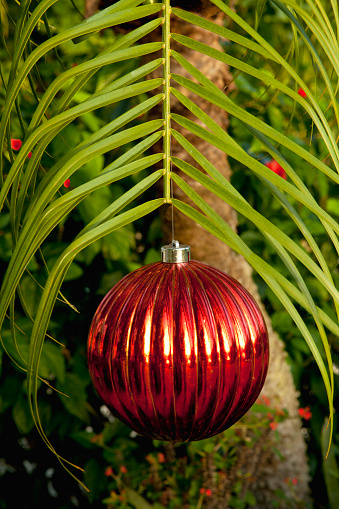 Frond「Red Christmas ball hangs from palm frond」:スマホ壁紙(11)