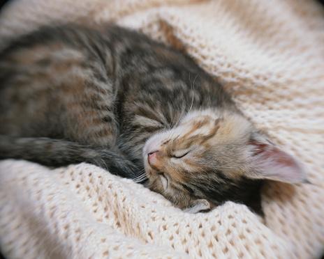 Kitten「Kitten sleeping」:スマホ壁紙(16)