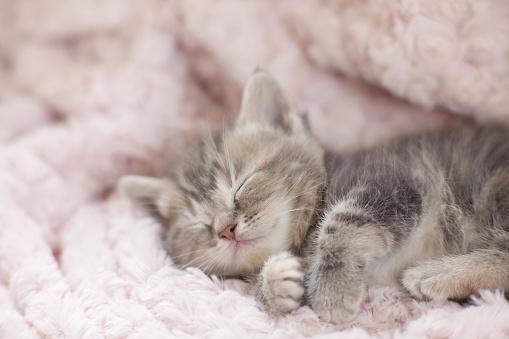 子猫「Kitten Sleeping on Towel」:スマホ壁紙(9)