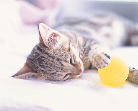 Kitten「Kitten sleeping with a ball in it's hand」:スマホ壁紙(15)