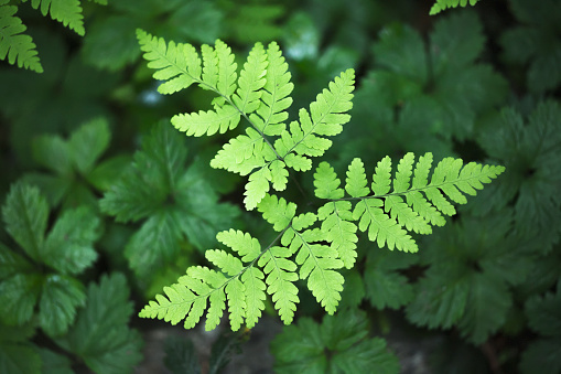 Joffre Lakes Provincial Park「A young fern stands out against a darker forest floor」:スマホ壁紙(15)