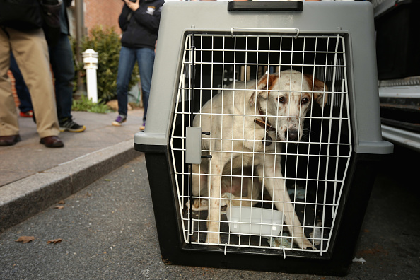 動物「Abandoned Dogs Rescued From Sochi Arrive At Washington DC Rescue Shelter」:写真・画像(18)[壁紙.com]