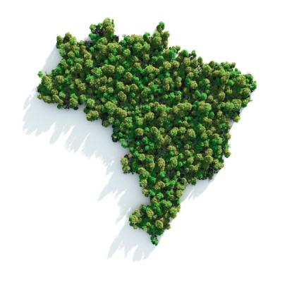 Amazon Rainforest「Green Brazil」:スマホ壁紙(15)