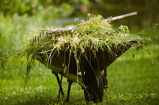Gardening「Wheelbarrow full of weeds」:スマホ壁紙(7)