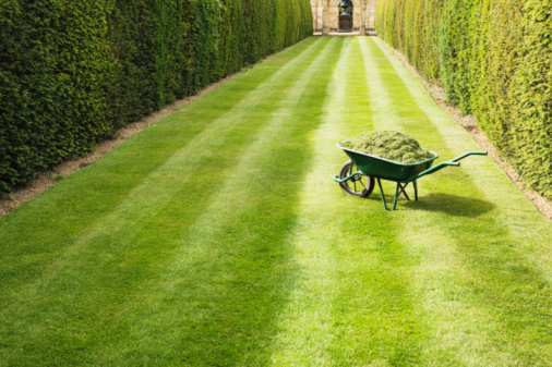 Gardening「Wheelbarrow full with grass clippings on mown, striped lawn」:スマホ壁紙(6)