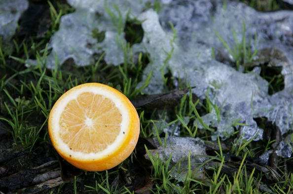 Orange - Fruit「Cold Snap Endangers California Citrus Crop」:写真・画像(19)[壁紙.com]