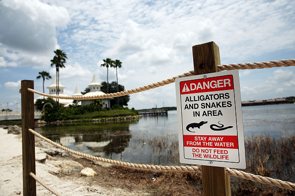 ディズニー「Disney Installs Alligator Warning Signs In Aftermath Of Toddler Death At One Of Its Resorts」:写真・画像(19)[壁紙.com]