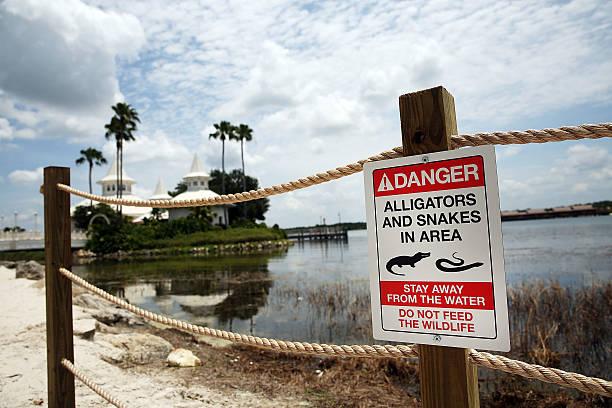 Disney Installs Alligator Warning Signs In Aftermath Of Toddler Death At One Of Its Resorts:ニュース(壁紙.com)