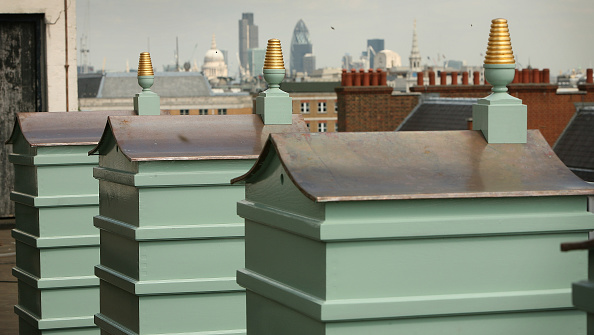 Rooftop「Fortnum And Mason Beehives Take Up Residence On The Roof」:写真・画像(14)[壁紙.com]