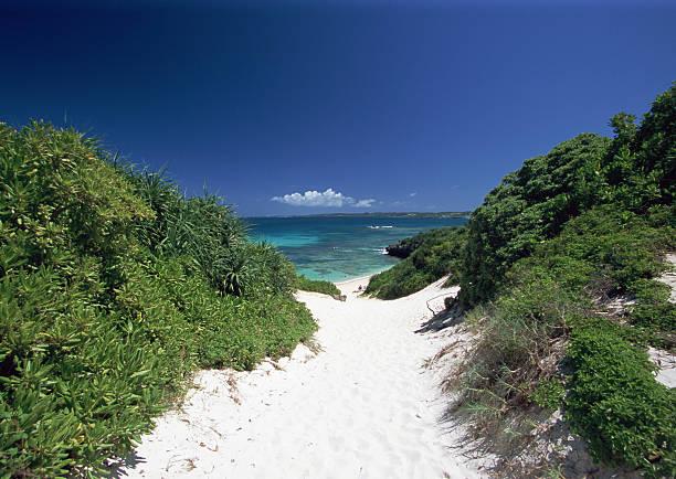 A path to beach:スマホ壁紙(壁紙.com)