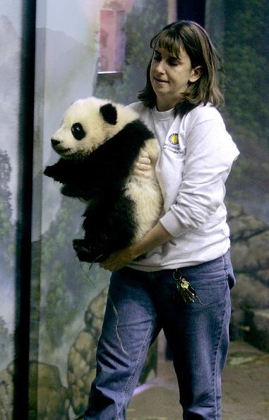 Bear Cub「National Zoo Exhibits Its New Giant Panda Cub」:写真・画像(8)[壁紙.com]
