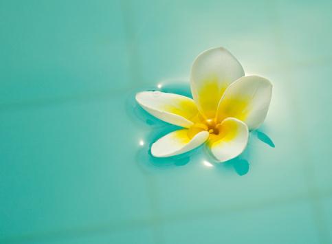 Frangipani「beautiful flower」:スマホ壁紙(16)
