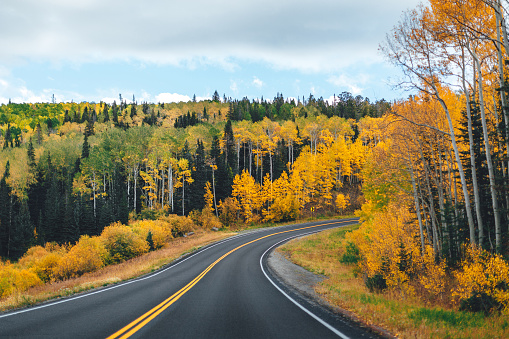 Aspen Tree「Beautiful Fall Colors Autumn Change Shot of Aspen Trees Driving Up the Highway Into the Grand Mesa National Forest in Western Colorado」:スマホ壁紙(6)