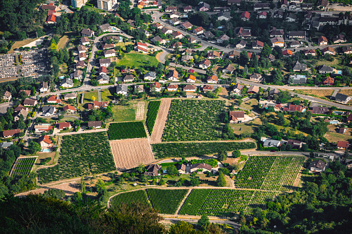 Bugey「Beautiful French vineyard aerial view plantation cultivated field on hill illuminated by summer sunlight, near small village and houses of Culoz in the Bugey mountains in Ain department Auvergne-Rhone-Alpes region」:スマホ壁紙(18)