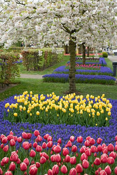 美しいフラワーベッドのチューリップで春のキューケンホフ(XXL:スマホ壁紙(壁紙.com)