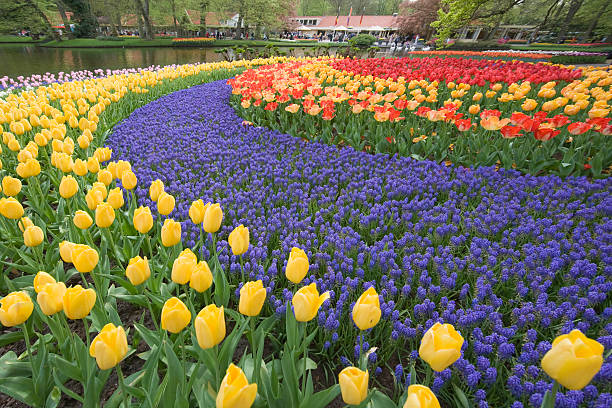 Beautiful flower bed of tulips in park:スマホ壁紙(壁紙.com)