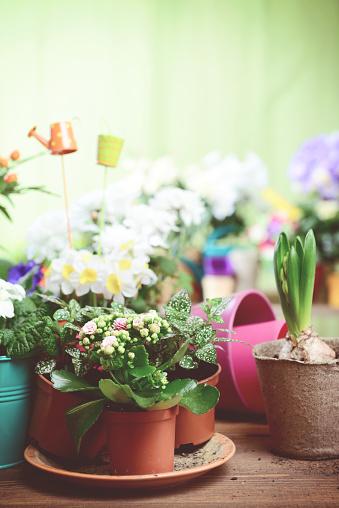 Flower Shop「beautiful flowering plants and flowers in flower pots」:スマホ壁紙(7)