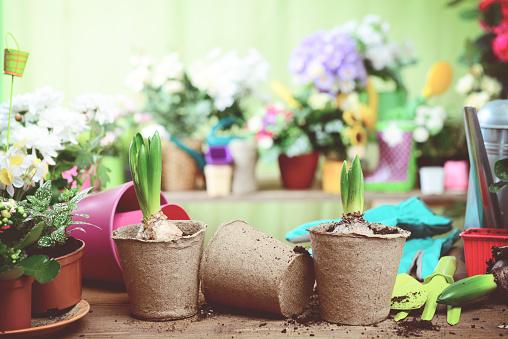 Flower Shop「beautiful flowering plants and flowers in flower pots」:スマホ壁紙(13)
