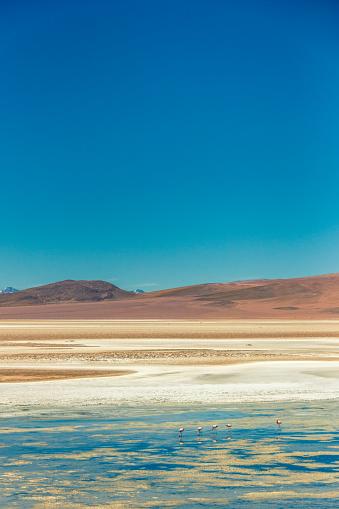 Shallow「Beautiful flamingos feeding in the lake on Atacama Desert.」:スマホ壁紙(14)