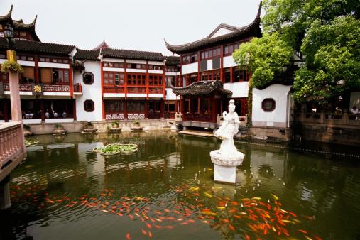 Carp「Yu Garden, Shanghai, China」:スマホ壁紙(5)