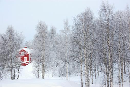 Birch Tree「Red House in Winter」:スマホ壁紙(10)