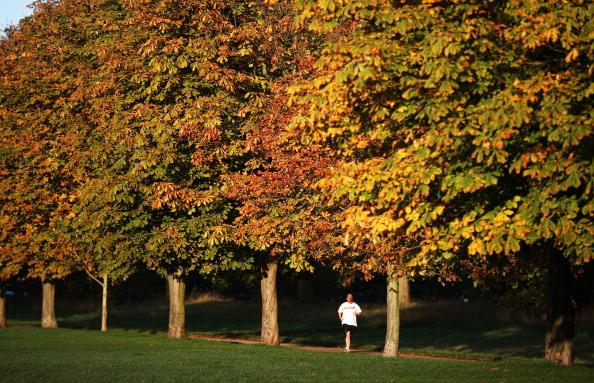 紅葉「Autumn Colours Can Be Seen Throughout The UK」:写真・画像(9)[壁紙.com]
