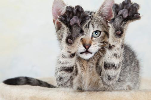 体を伸ばす「Kitten stretching out paw」:スマホ壁紙(14)
