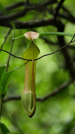 小枝「The Kersik Luway National Park, Melak Borneo.」:スマホ壁紙(11)