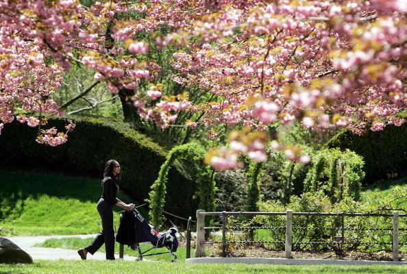 Springtime「Brooklyn Botanical Garden Holds Cherry Blossom Festival」:写真・画像(17)[壁紙.com]