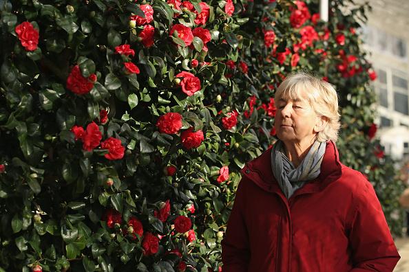 Environmental Conservation「Britain's Oldest Camellia Collection Blooms」:写真・画像(9)[壁紙.com]