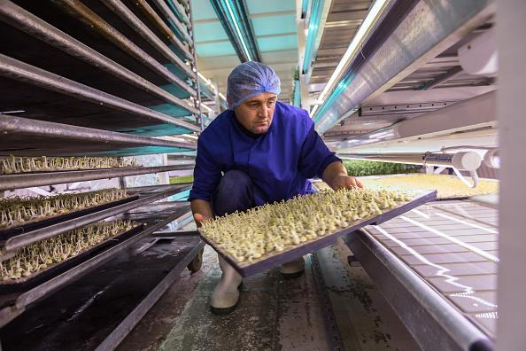 Wasabi「Urban Farming Goes Underground」:写真・画像(7)[壁紙.com]