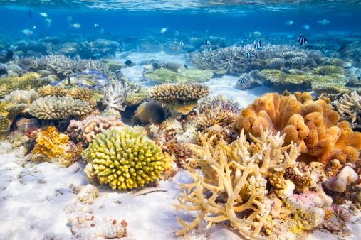 Indian Ocean「Coral Reef Garden」:スマホ壁紙(9)