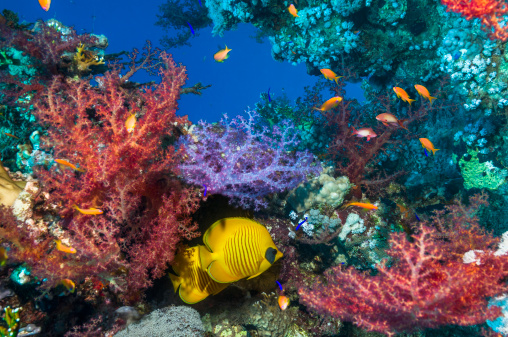 Soft Coral「Coral reef scenery with butterflyfish」:スマホ壁紙(19)