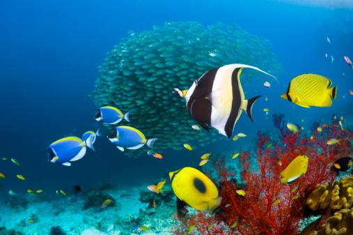 Soft Coral「Coral reef fish」:スマホ壁紙(12)
